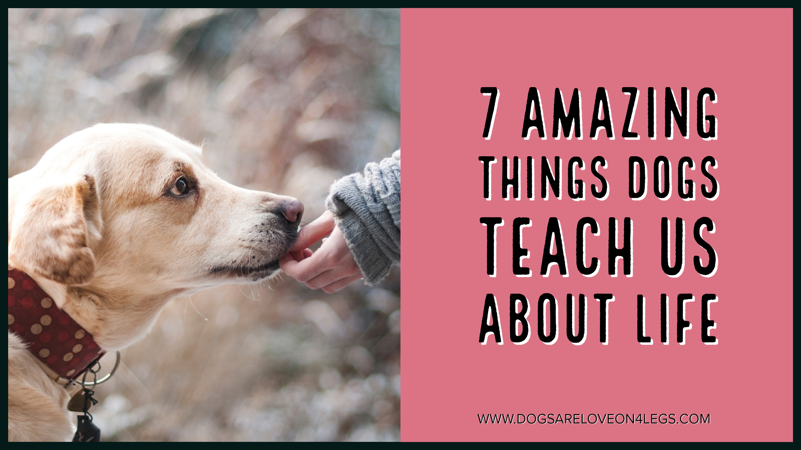 7 Amazing Things Dogs Teach Us About Life - Dogs Are Love ...