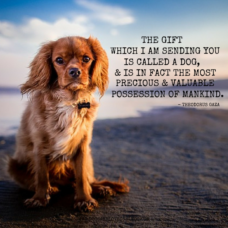 Dog Quotes | 10 Greatest Dog Quotes That Prove A Dog Is The Best Gift Dogs Are