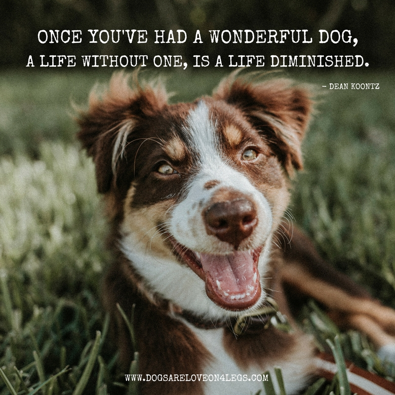 10 Greatest Dog Quotes That Prove A Dog Is The Best Gift - Dogs Are