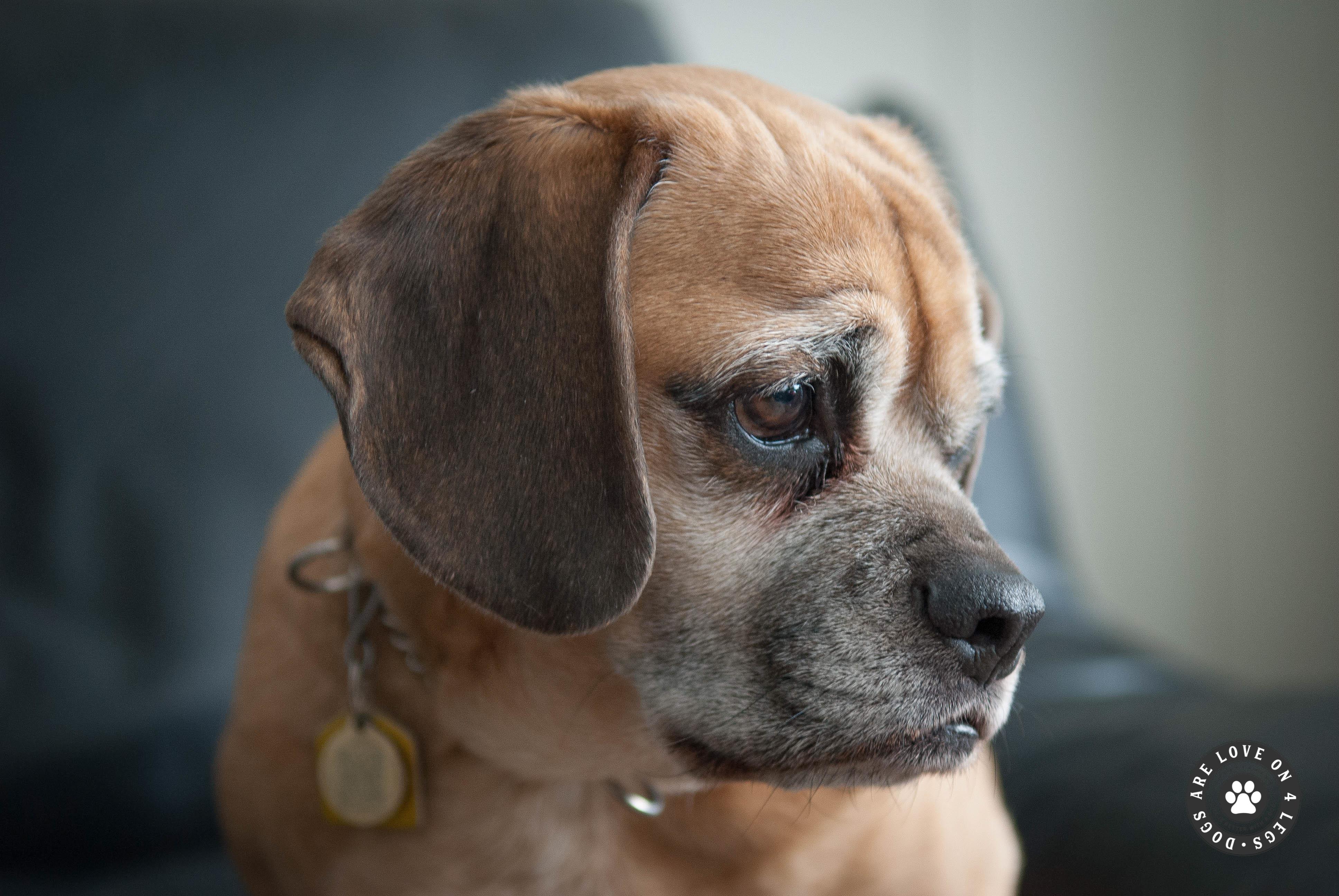 homestay blinds dog haven img prev